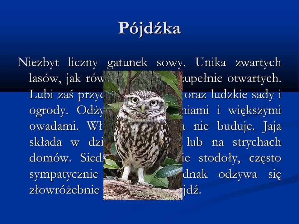 Pójdźka Niezbyt liczny gatunek sowy. Unika zwartych lasów, jak również terenów zupełnie otwartych. Lubi zaś przydrożne wierzby oraz ludzkie sady i ogr