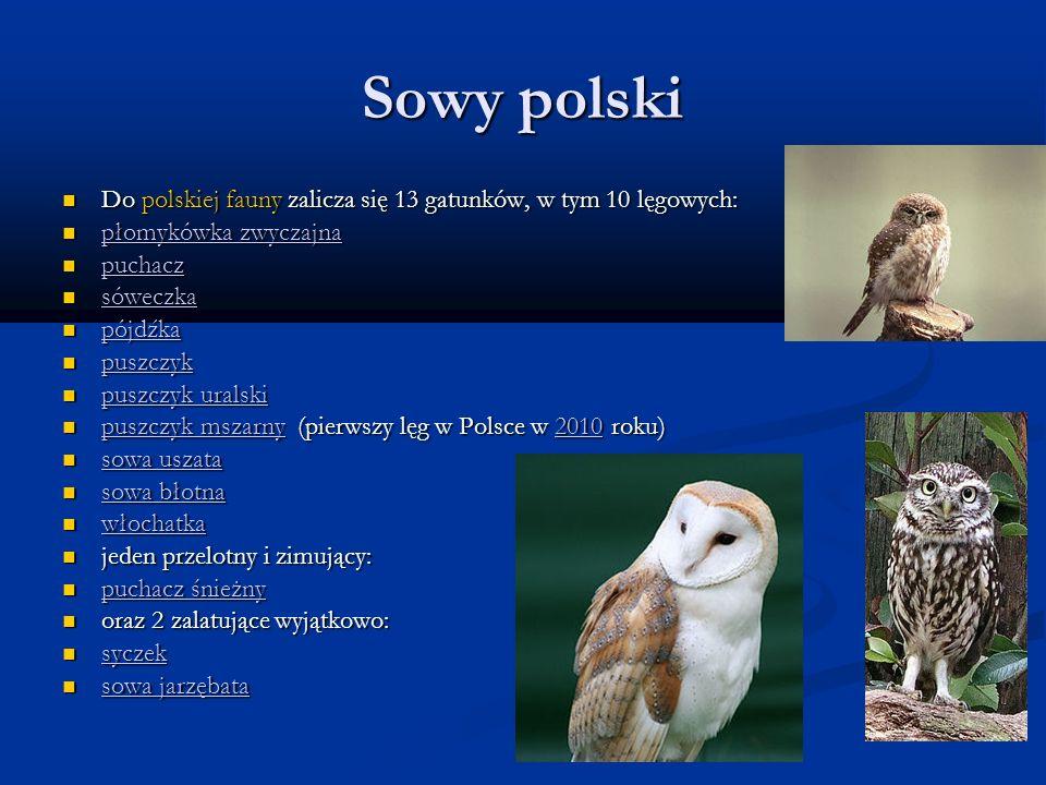 Sowy polski Do polskiej fauny zalicza się 13 gatunków, w tym 10 lęgowych: Do polskiej fauny zalicza się 13 gatunków, w tym 10 lęgowych: płomykówka zwy