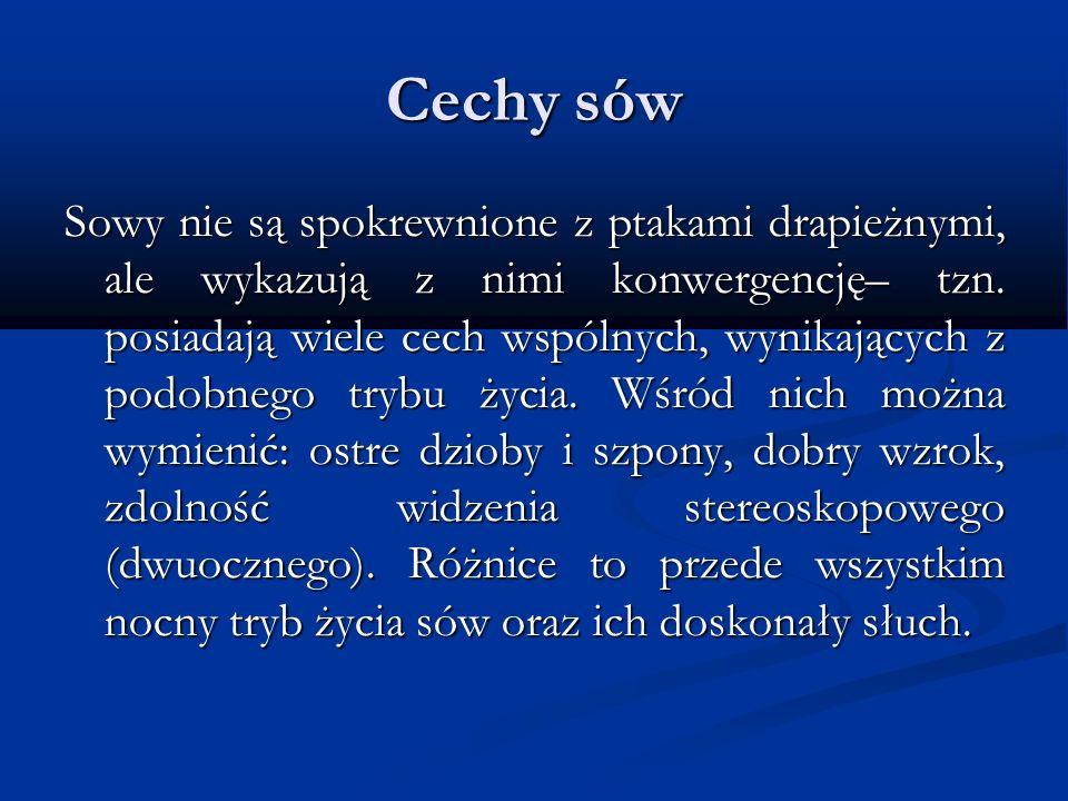 Cechy sów Sowy nie są spokrewnione z ptakami drapieżnymi, ale wykazują z nimi konwergencję– tzn. posiadają wiele cech wspólnych, wynikających z podobn