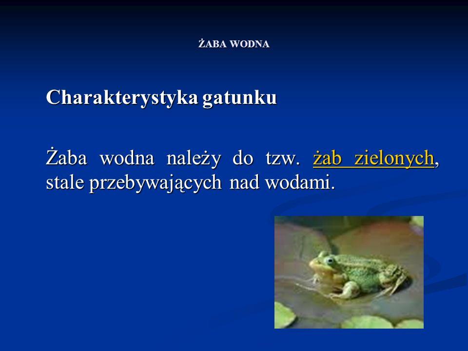 ŻABA WODNA Charakterystyka gatunku Charakterystyka gatunku Żaba wodna należy do tzw. żab zielonych, stale przebywających nad wodami. żab zielonychżab