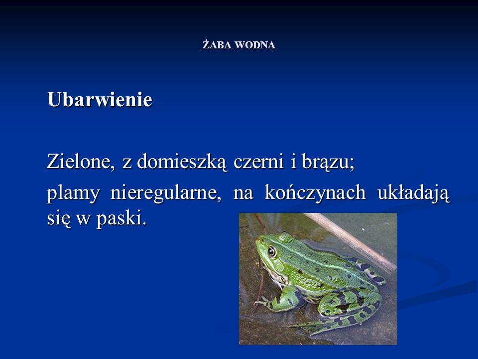 ŻABA WODNA Rozród Okres godów przypada na koniec wiosny i początek lata, w Polsce na połowę maja.