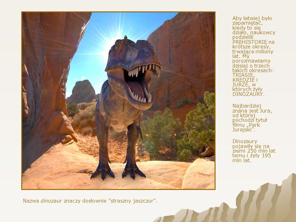 Wszystko to wiemy dzięki pracy naukowców, którzy zajmują się badaniem prehistorii i dinozaurów.