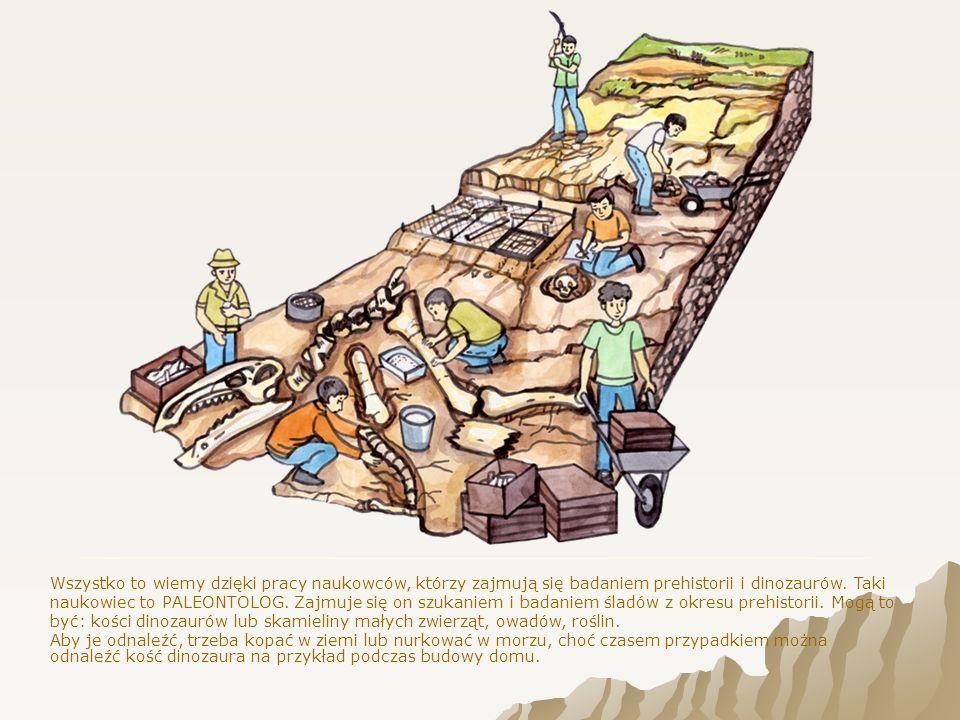 Dzięki skamielinom i kościom wiemy, jak wyglądały dinozaury, oraz inne zwierzęta i rośliny z dawnych epok.