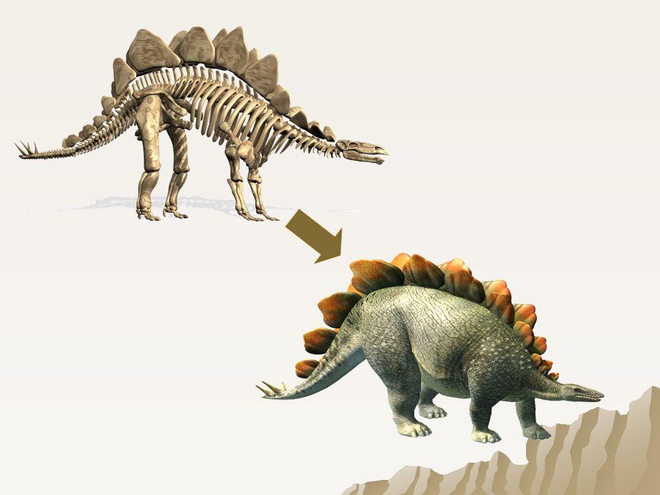 Szkielety dinozaurów znajdowano już bardzo dawno.