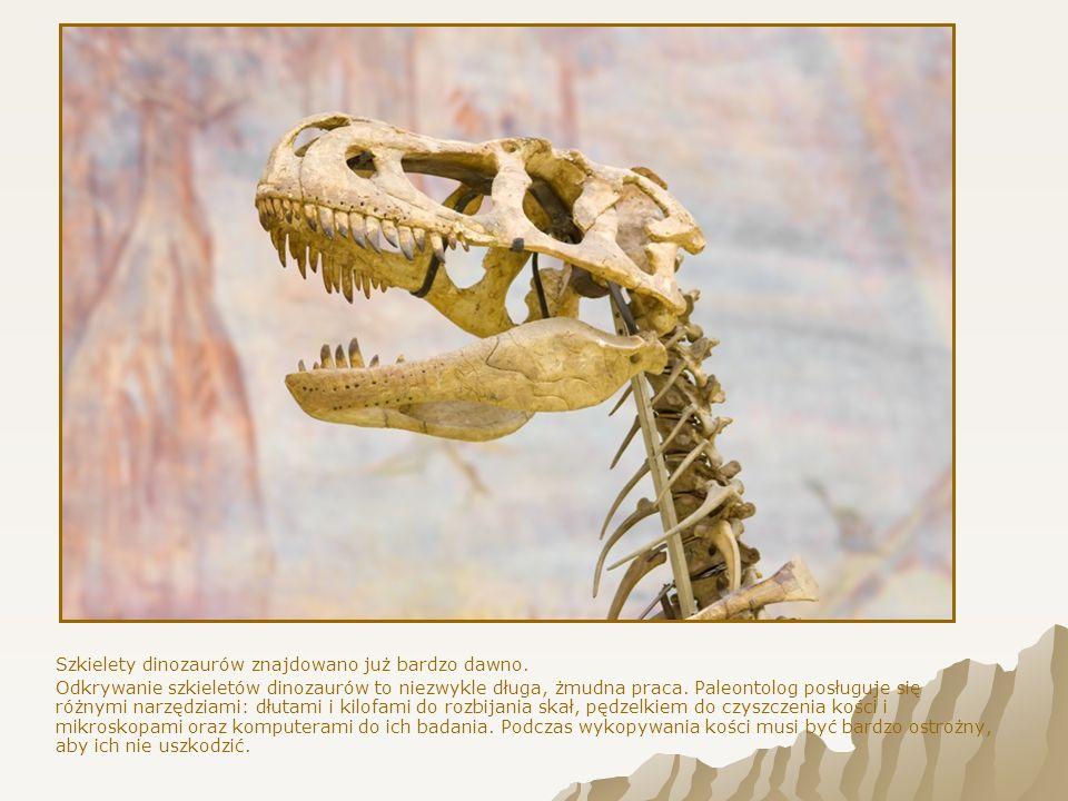 To czworonożny roślinożerny dinozaur.