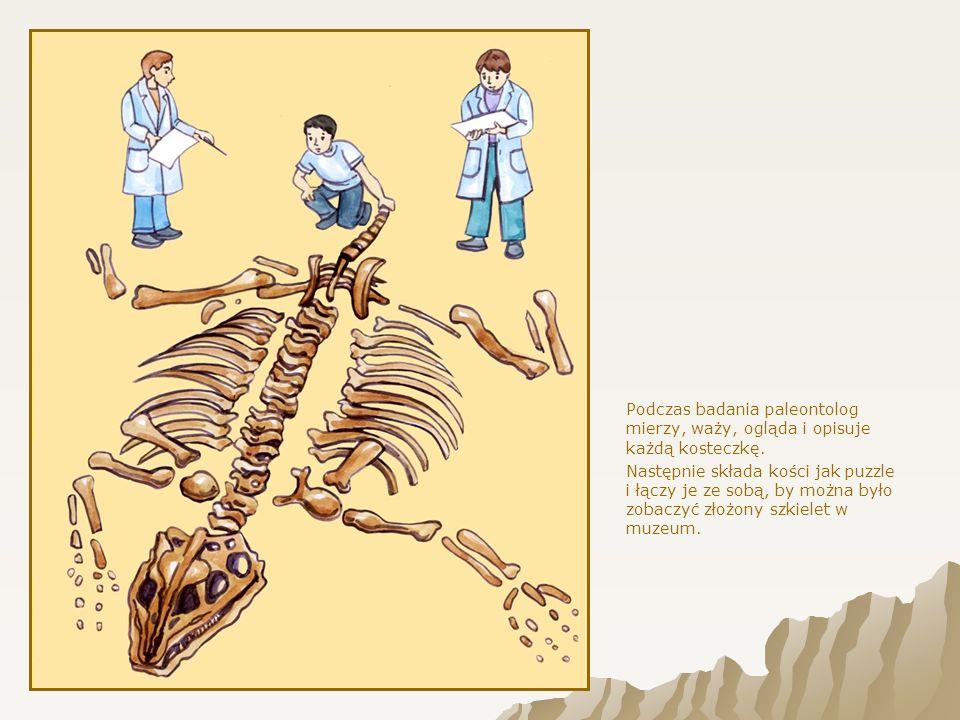 Dinozaury składały jaja pokryte twardymi skorupkami o budowie podobnej do ptasiej.