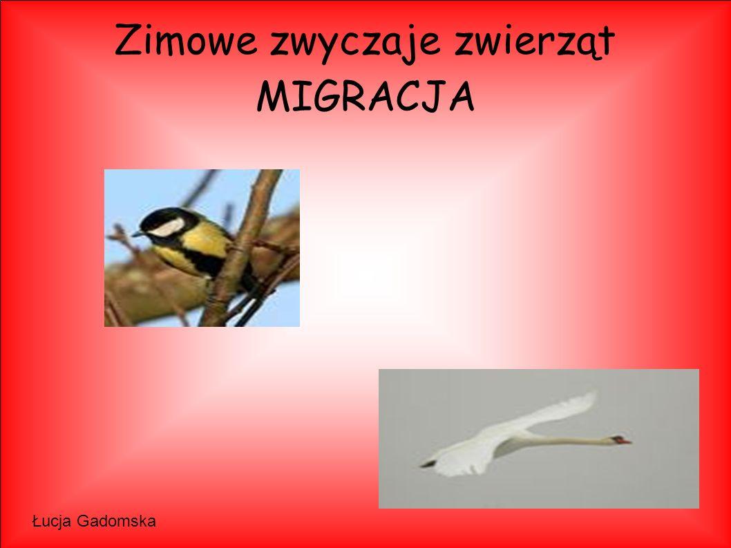 Zimowe zwyczaje zwierząt MIGRACJA Łucja Gadomska