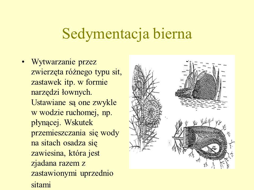 Sedymentacja czynna Zwierzę wywołuje prąd wody w postaci wiru, w wyniku czego cząstki pokarmu napędzane są w okolice otworu pokarmowego i tam się osad
