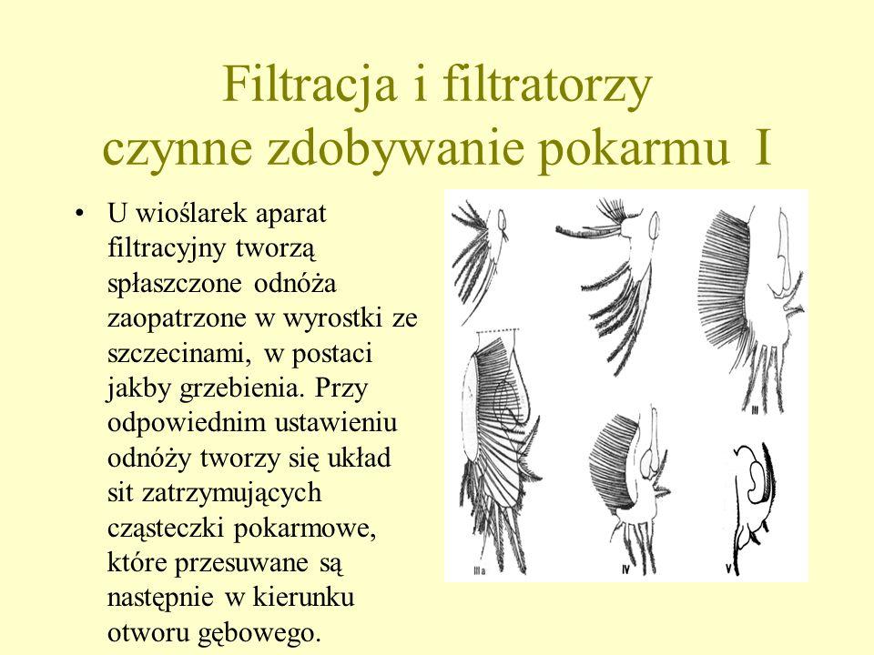 Sedymentacja bierna Wytwarzanie przez zwierzęta różnego typu sit, zastawek itp. w formie narzędzi łownych. Ustawiane są one zwykle w wodzie ruchomej,