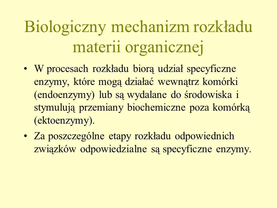 Bakterie heterotroficzne i grzyby odżywiają się poprzez rozkład materii organicznej Energia wyzwalana podczas jej rozkładu jest również zużywana w pro