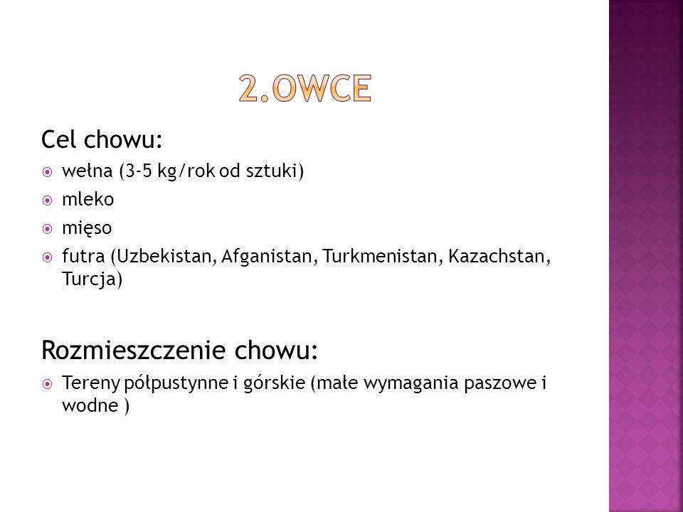 Cel chowu: wełna (3-5 kg/rok od sztuki) mleko mięso futra (Uzbekistan, Afganistan, Turkmenistan, Kazachstan, Turcja) Rozmieszczenie chowu: Tereny półp
