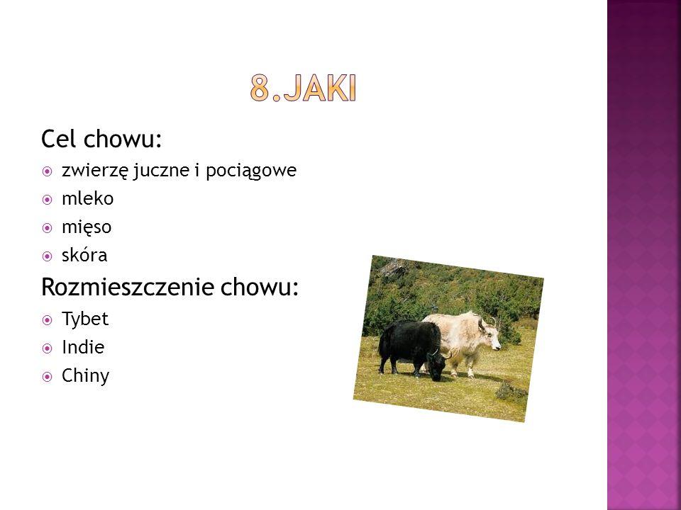Cel chowu: zwierzę juczne i pociągowe mleko mięso skóra Rozmieszczenie chowu: Tybet Indie Chiny