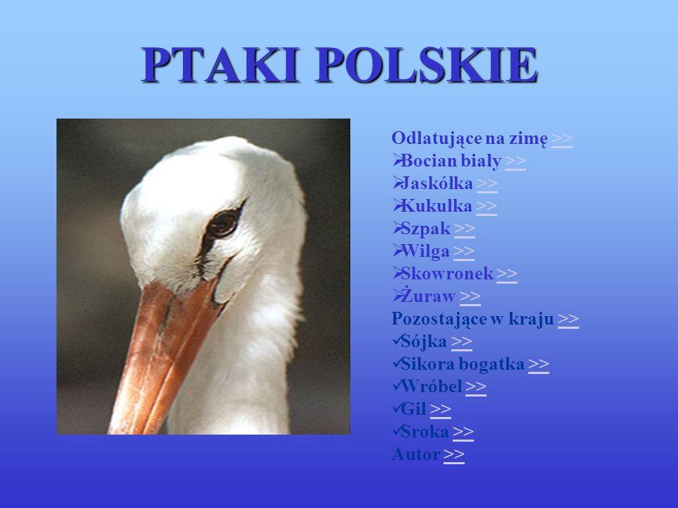 PTAKI POLSKIE Odlatujące na zimę >>>> Bocian biały >>>> Jaskółka >>>> Kukułka >>>> Szpak >>>> Wilga >>>> Skowronek >>>> Żuraw >>>> Pozostające w kraju >>>> Sójka >>>> Sikora bogatka >>>> Wróbel >>>> Gil >>>> Sroka >>>> Autor >>>>
