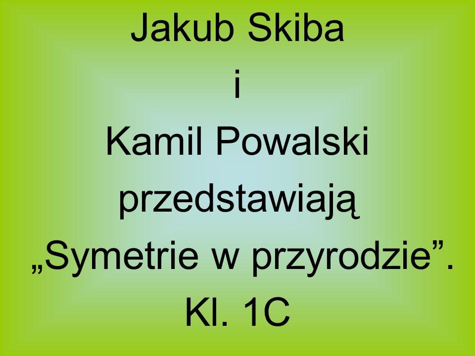 Jakub Skiba i Kamil Powalski przedstawiają Symetrie w przyrodzie. Kl. 1C