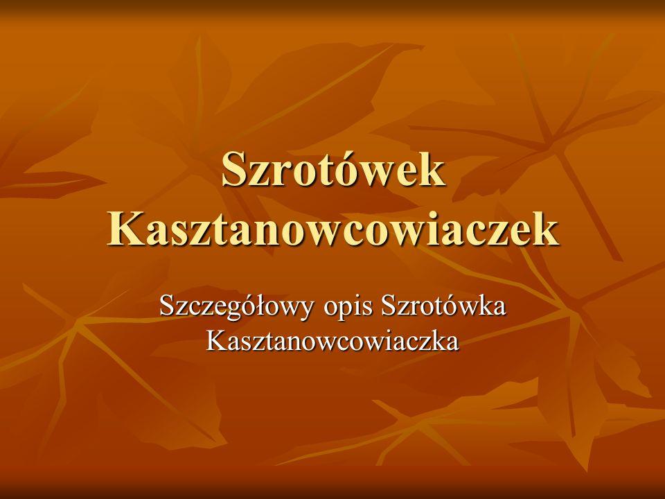 Szrotówek Kasztanowcowiaczek Szczegółowy opis Szrotówka Kasztanowcowiaczka