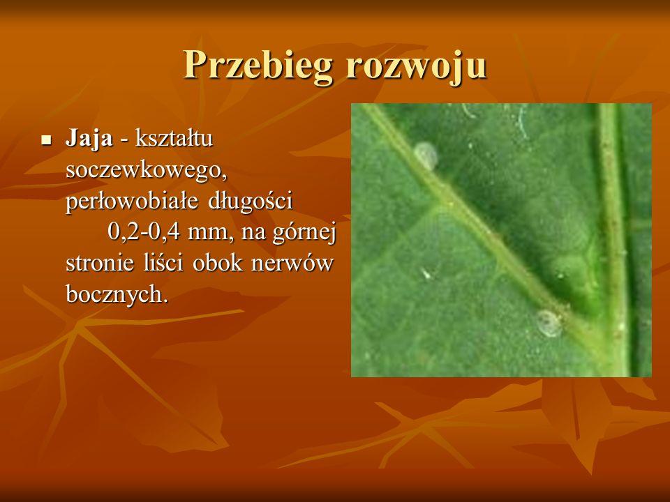 Przebieg rozwoju Jaja - kształtu soczewkowego, perłowobiałe długości 0,2-0,4 mm, na górnej stronie liści obok nerwów bocznych. Jaja - kształtu soczewk