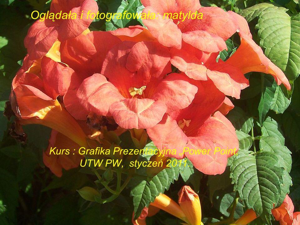 Oglądała i fotografowała: matylda Kurs : Grafika Prezentacyjna Power Point, UTW PW, styczeń 2011.