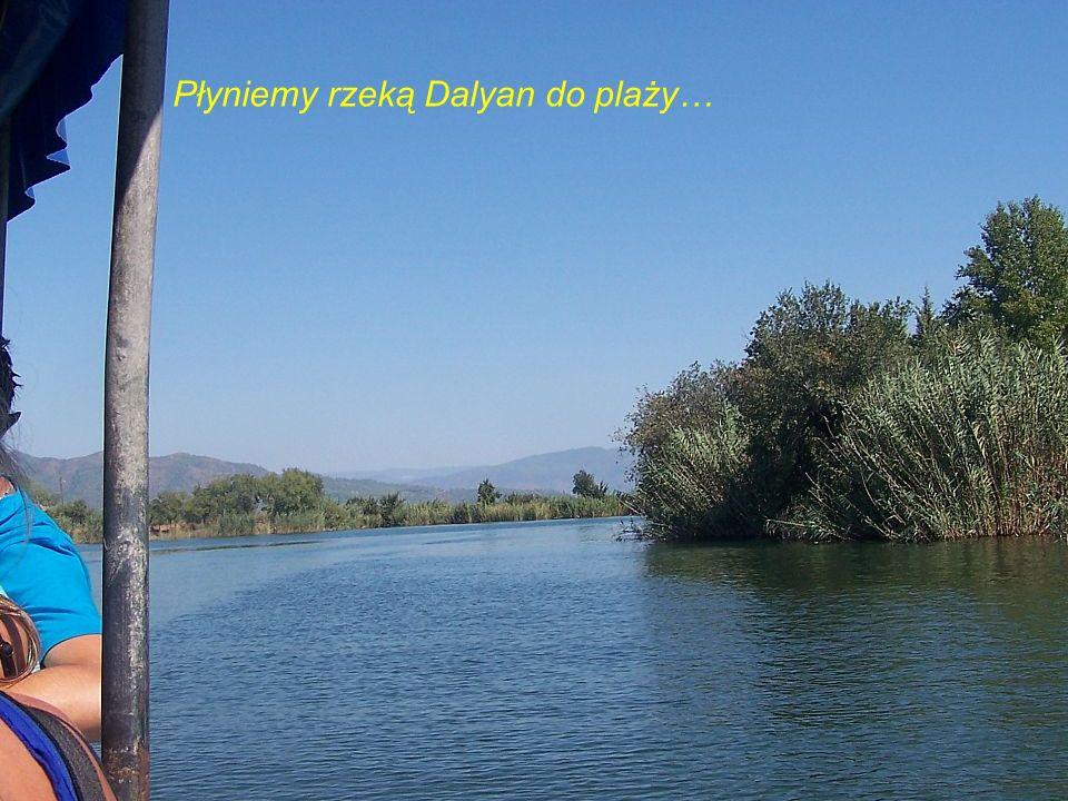 Płyniemy rzeką Dalyan do plaży…