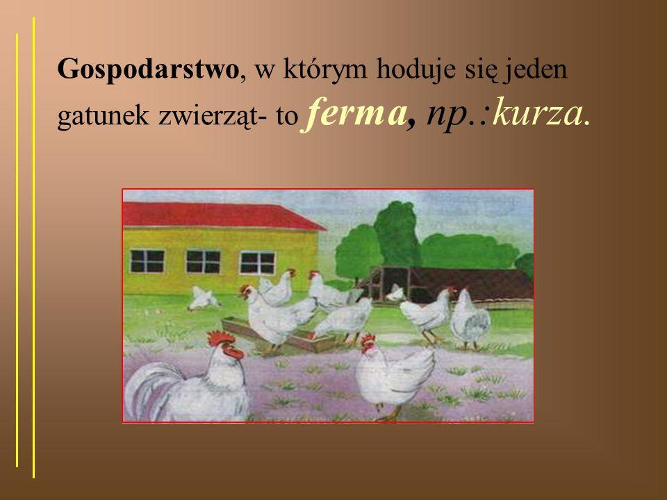 Rozwój ptaków: Samice składają jaja i wysiadują je. Z jaj wylęgają się pisklęta. kurzeindyczekacze gęsie