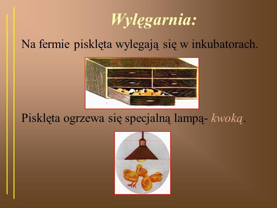 Gospodarstwo, w którym hoduje się jeden gatunek zwierząt- to ferma, np.:kurza.