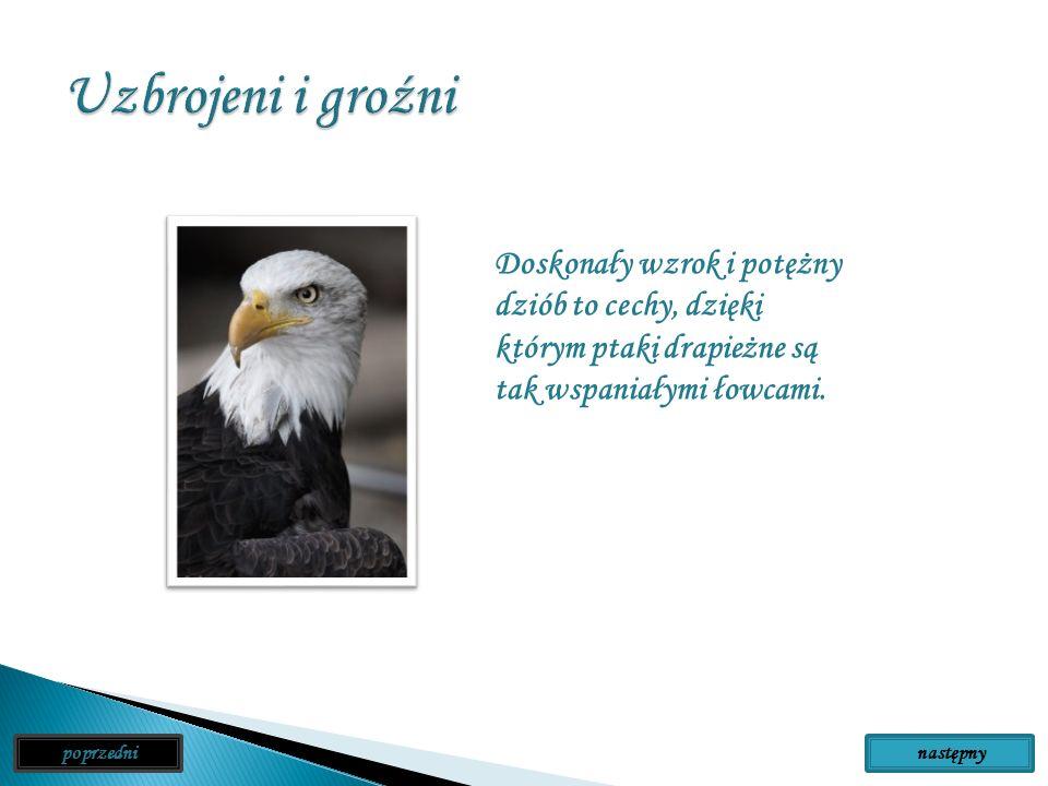 Ptaki drapieżne są nieźle uzbrojone. Mają bystry wzrok, który pozwala im dostrzec zdobycz nawet ze znacznej odległości. Ich stopy są zakończone ostrym