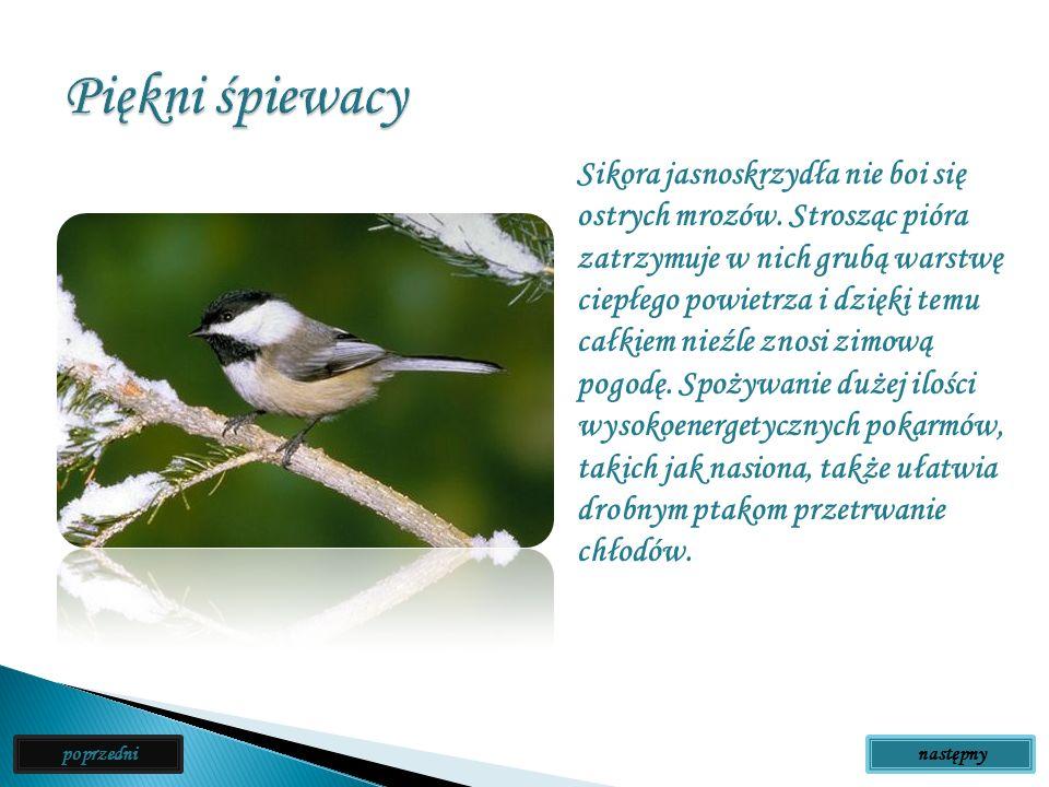 Ptaki, które najczęściej widujesz w pobliżu swojego domu, to zapewne w większości tak zwane ptaki śpiewające. Jest to najliczniejsza grupa ptaków, obe