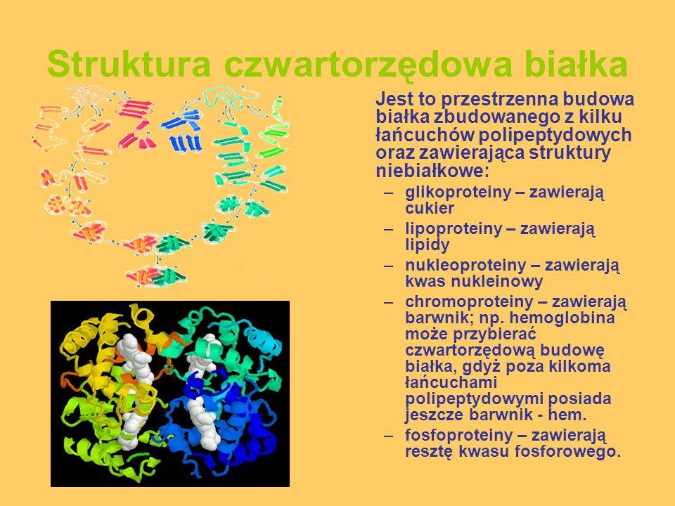 Struktura czwartorzędowa białka Jest to przestrzenna budowa białka zbudowanego z kilku łańcuchów polipeptydowych oraz zawierająca struktury niebiałkow