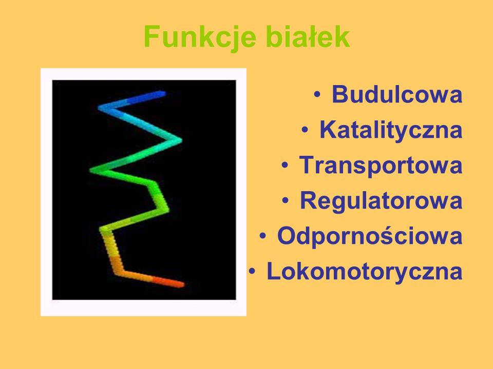 Funkcje białek Budulcowa Katalityczna Transportowa Regulatorowa Odpornościowa Lokomotoryczna