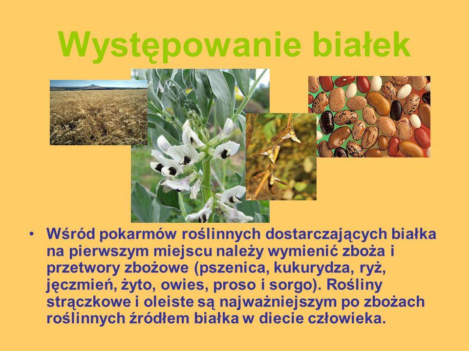 Występowanie białek Wśród pokarmów roślinnych dostarczających białka na pierwszym miejscu należy wymienić zboża i przetwory zbożowe (pszenica, kukuryd
