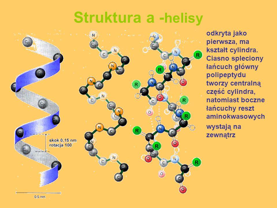 Struktura a - helisy odkryta jako pierwsza, ma kształt cylindra. Ciasno spleciony łańcuch główny polipeptydu tworzy centralną część cylindra, natomias