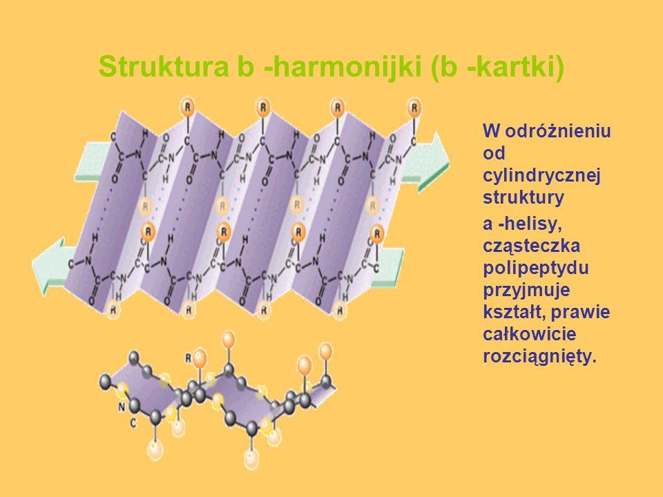 Struktura b -harmonijki (b -kartki) W odróżnieniu od cylindrycznej struktury a -helisy, cząsteczka polipeptydu przyjmuje kształt, prawie całkowicie ro