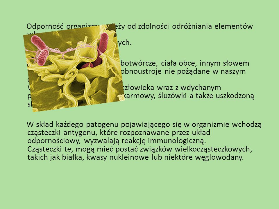 Odporność organizmu zależy od zdolności odróżniania elementów własnego ustroju od elementów obcych.