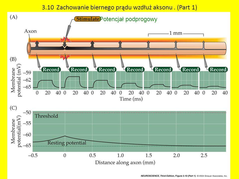 3.10 Zachowanie biernego prądu wzdłuż aksonu. (Part 1) Potencjał podprogowy