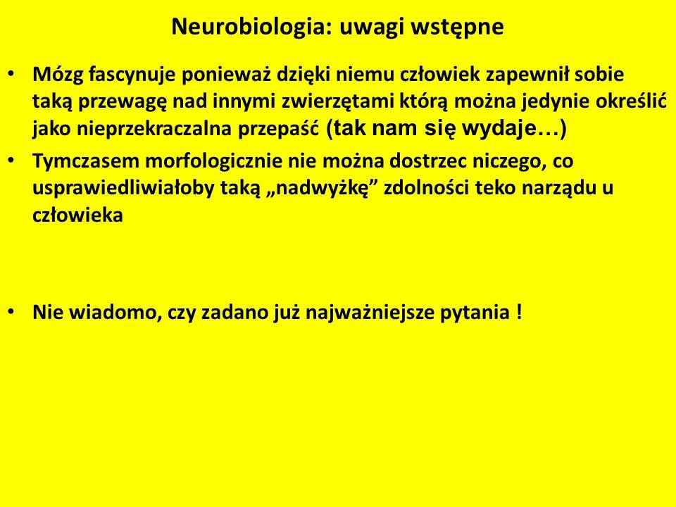 Neurobiologia: uwagi wstępne Mózg fascynuje ponieważ dzięki niemu człowiek zapewnił sobie taką przewagę nad innymi zwierzętami którą można jedynie okr