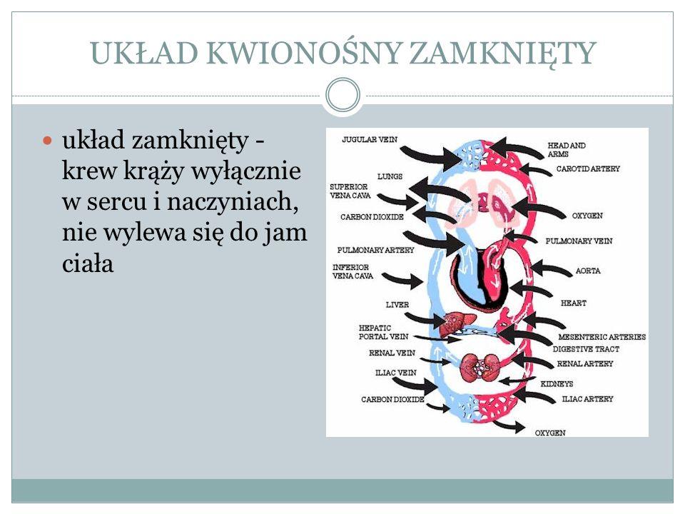 SERCE * położone w śródpiersiu za mostkiem * wielkością i kształtem przypomina dłoń zaciśniętą w pięść * jest to sprawna pompa zawieszona na naczyniach krwionośnych posiadająca własny system naczyniowy (tętnice wieńcowe i żyły serca) * od zewnątrz serce otoczone jest cienkim łącznotkankowym workiem – osierdziem * ściana serca jest trójwarstwowa: - wsierdzie – wyścieła wewnętrzną powierzchnię jam serca, cienki nabłonek leżący na łącznotkankowej błonie, do której wnikają zakończenia nerwowe oraz naczynia włosowate - śródsierdzie – środkowa warstwa tworzona przez mięsień sercowy, grubość śródsierdzia w obu przedsionkach jest stosunkowo niewielka i wynosi około 2-3mm, w prawej komorze osiąga już 5mm, a w lewej 15mm - nasierdzie – najbardziej zewnętrzna warstwa, łącznotkankowa