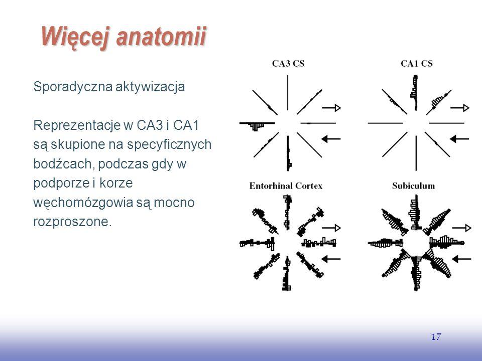 EE141 17 Więcej anatomii Sporadyczna aktywizacja Reprezentacje w CA3 i CA1 są skupione na specyficznych bodźcach, podczas gdy w podporze i korze węcho