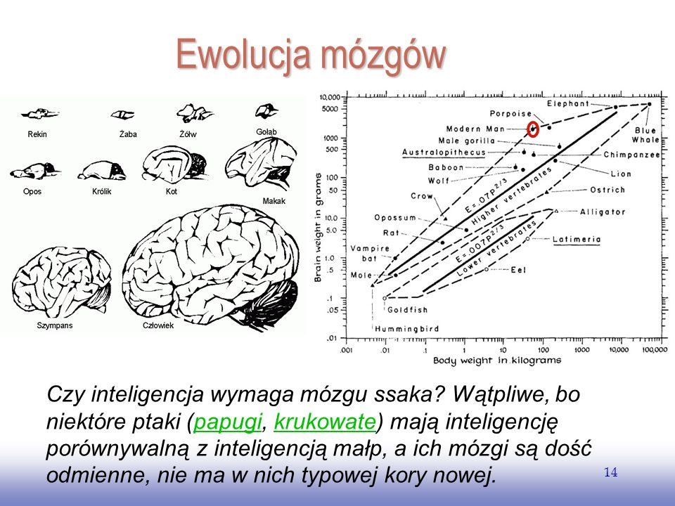 EE141 14 Ewolucja mózgów Czy inteligencja wymaga mózgu ssaka.