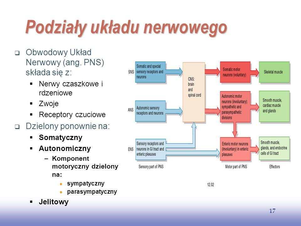 EE141 17 Podziały układu nerwowego Obwodowy Układ Nerwowy (ang.