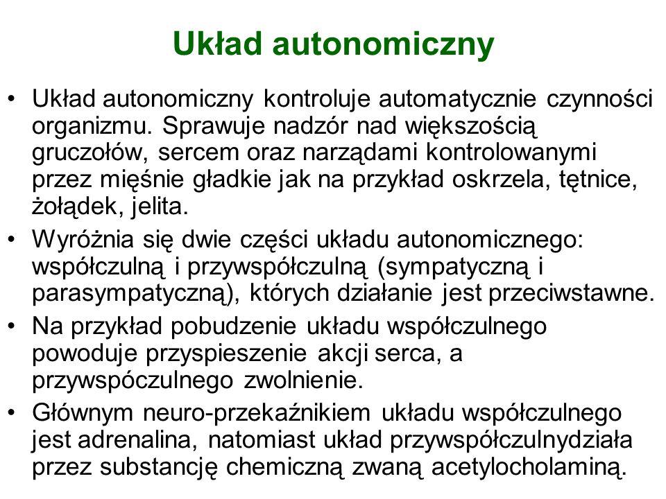 Układ autonomiczny Układ autonomiczny kontroluje automatycznie czynności organizmu. Sprawuje nadzór nad większością gruczołów, sercem oraz narządami k