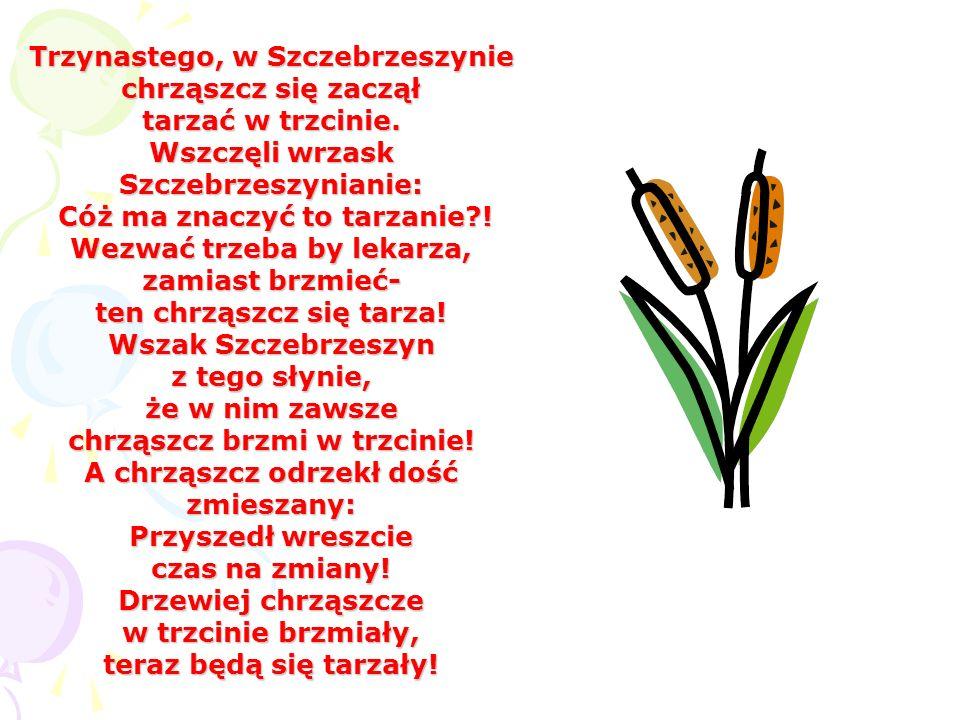 Trzynastego, w Szczebrzeszynie chrząszcz się zaczął tarzać w trzcinie. Wszczęli wrzask Szczebrzeszynianie: Cóż ma znaczyć to tarzanie?! Wezwać trzeba