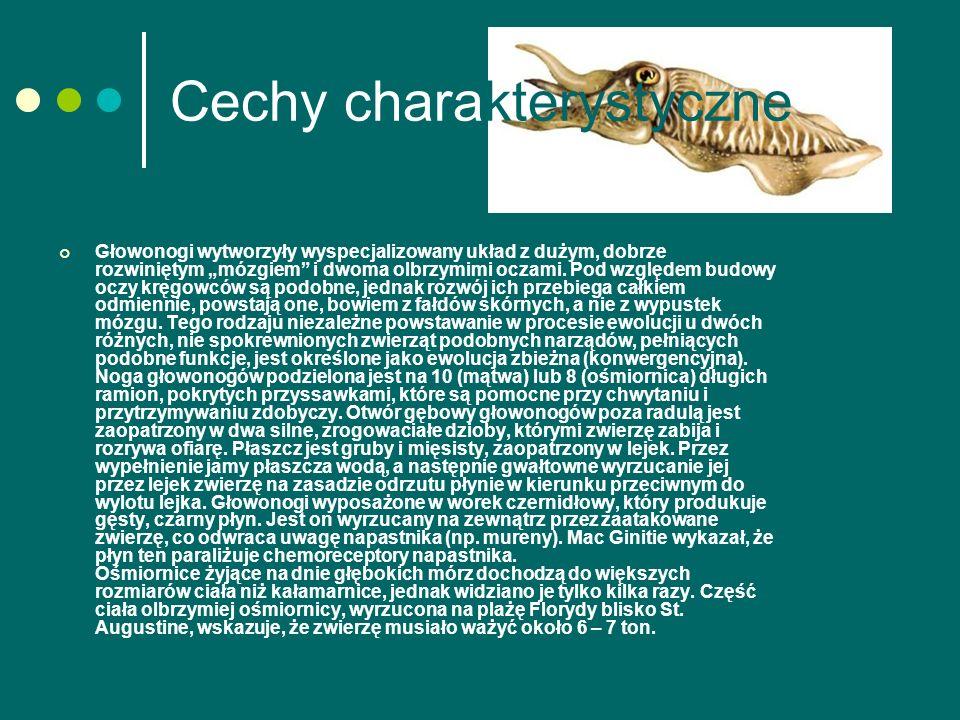 Cechy charakterystyczne Głowonogi wytworzyły wyspecjalizowany układ z dużym, dobrze rozwiniętym mózgiem i dwoma olbrzymimi oczami.