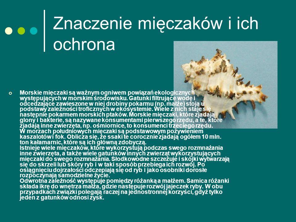 Znaczenie mięczaków i ich ochrona Morskie mięczaki są ważnym ogniwem powiązań ekologicznych występujących w morskim środowisku.
