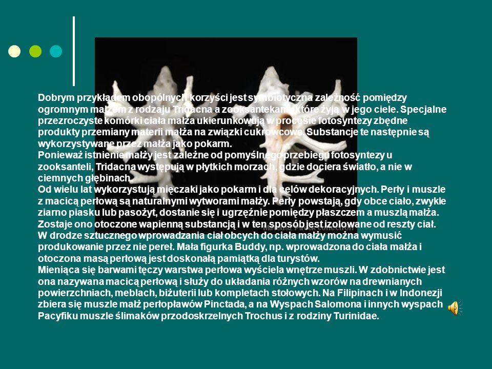 Dobrym przykładem obopólnych korzyści jest symbiotyczna zależność pomiędzy ogromnym małżem z rodzaju Tridacna a zooksantekami, które żyją w jego ciele.