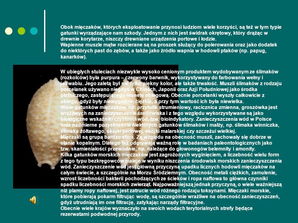 Obok mięczaków, których eksploatowanie przynosi ludziom wiele korzyści, są też w tym typie gatunki wyrządzające nam szkody.