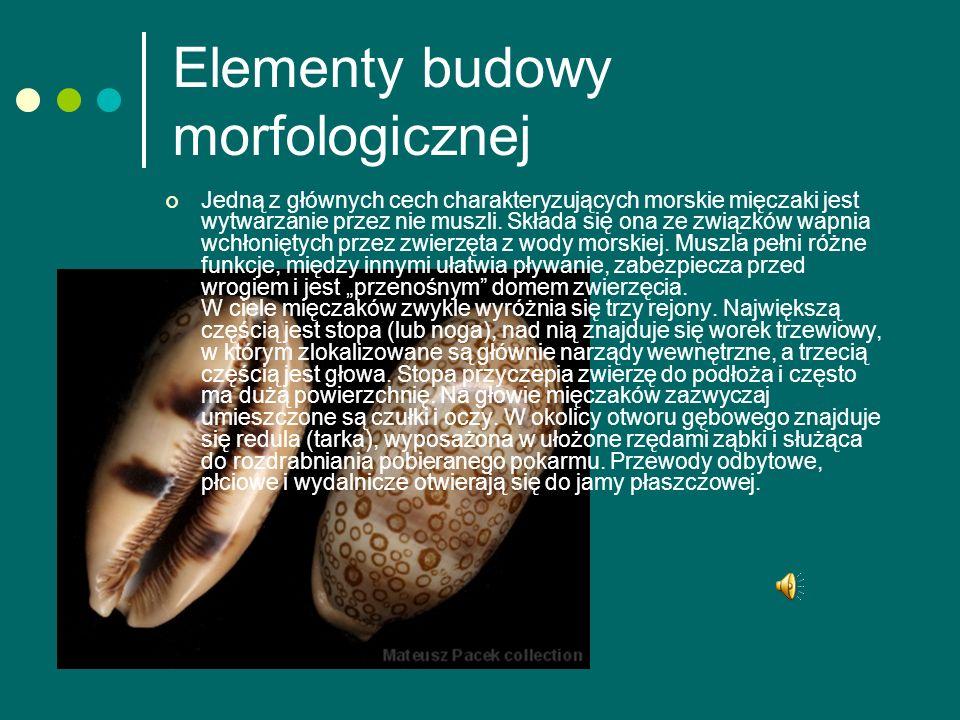 Elementy budowy morfologicznej Jedną z głównych cech charakteryzujących morskie mięczaki jest wytwarzanie przez nie muszli.