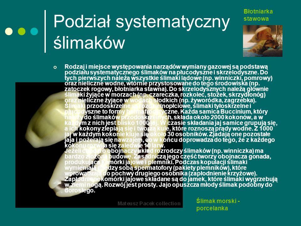 Podział systematyczny ślimaków Rodzaj i miejsce występowania narządów wymiany gazowej są podstawą podziału systematycznego ślimaków na płucodyszne i skrzelodyszne.
