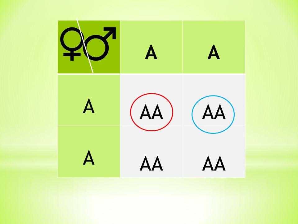 AA A AA A