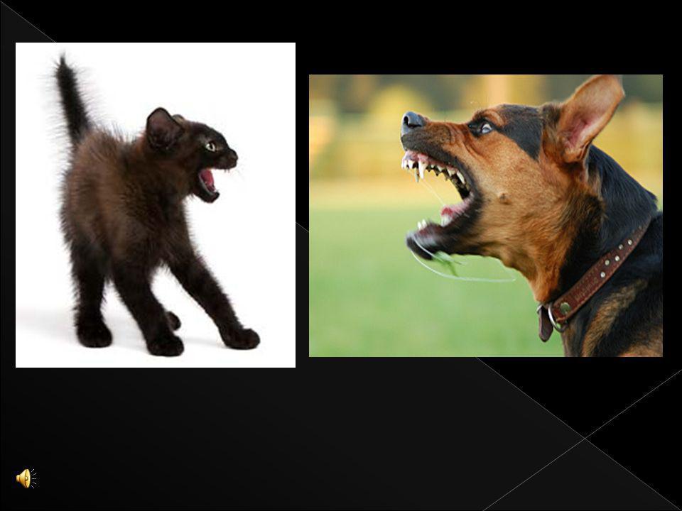 Agresja może występować także u zwierząt np : Psów: P roblem agresji psów jest bardzo powszechny. Może przyjmować ekstremalne rozmiary, które znamy z