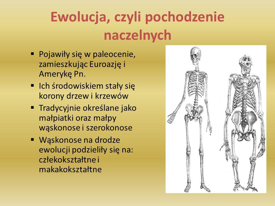 Rząd: Naczelne Stworzyli mnie: P. Michalec N. Marek T. Grotyński A. Głowacka