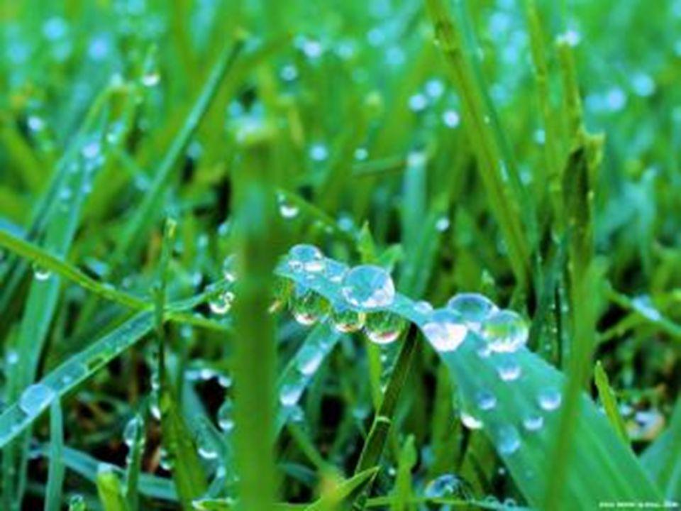 Poranek różem błądzi po ziemi, opadły mgielne warkocze pledem, zaśmiał się ogród kwiatów kolorem, trawy dźwigają łez rosy schedę.